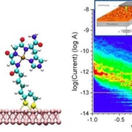 """Electron Transport through Self-Assembled Monolayers of Tripeptides."""""""