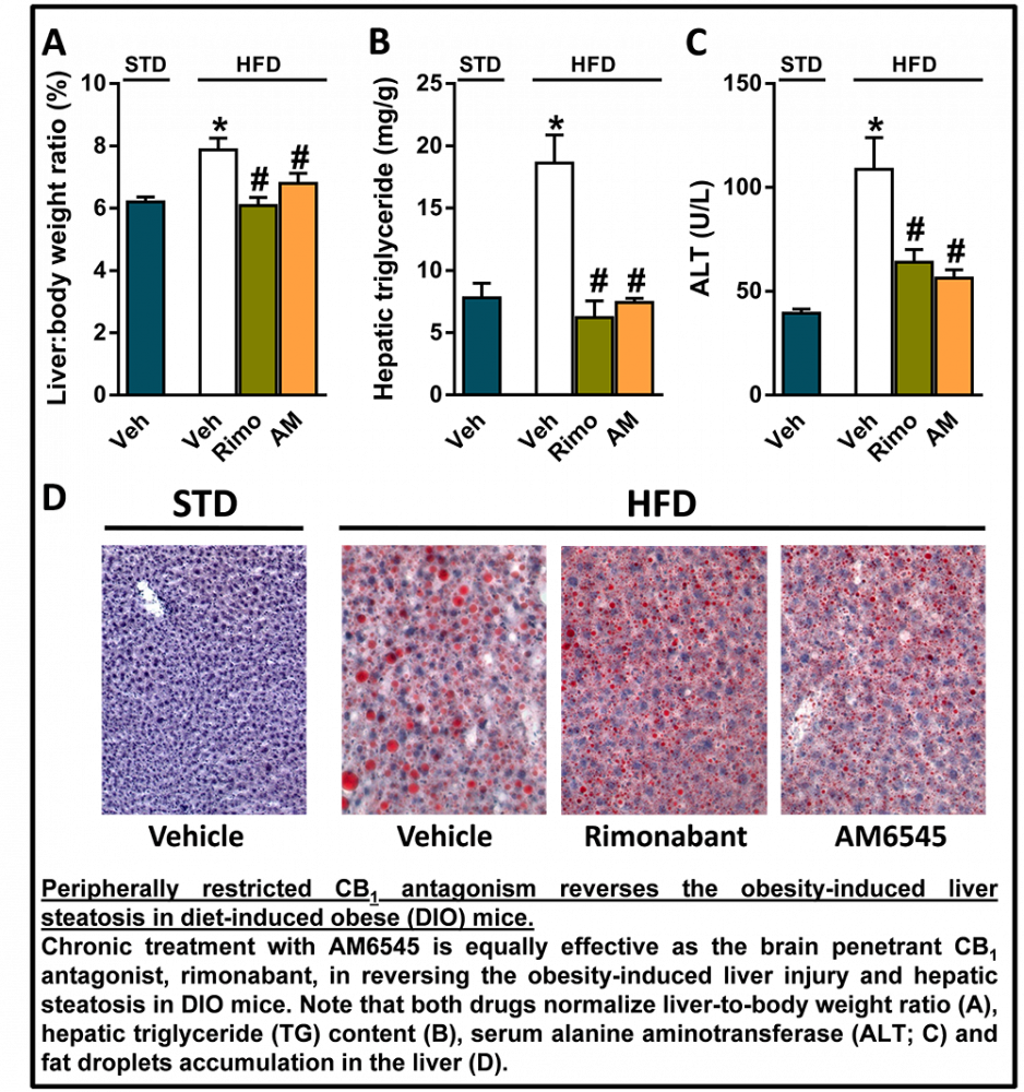Exploring The Signaling Pathways Activated By Hepatic Cb1 Receptor