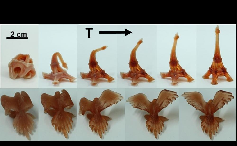 Fig. 2: 3D printed structures changing shape upon heating due to the shape memory polymer.