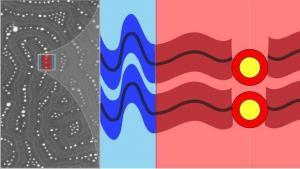 54. Nanoparticle assembly using bottlebrush block copolymers