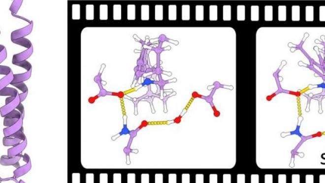 Sodium Pumping Mechanism of KR2