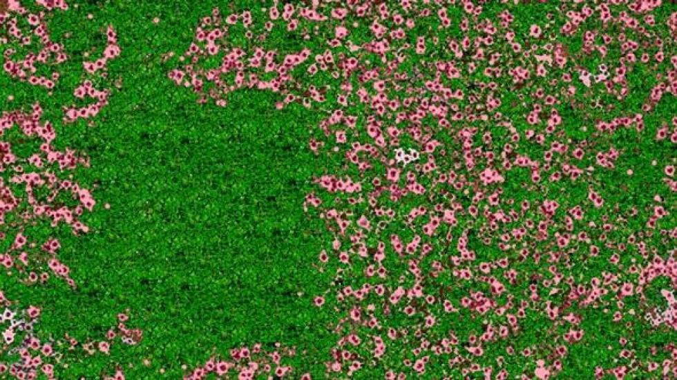 Raju's flower garden