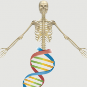 really_has_no_background_skeleton.png